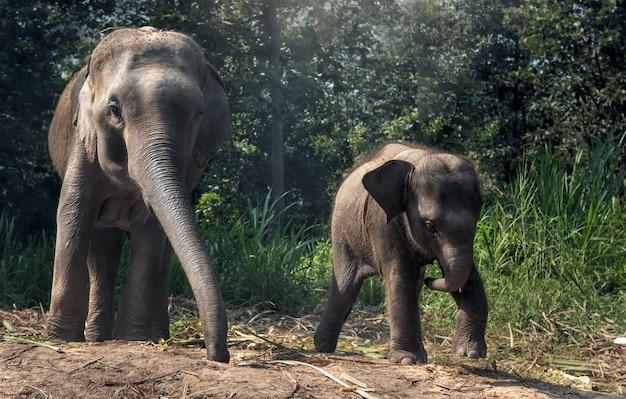 Madre elefante con bambino