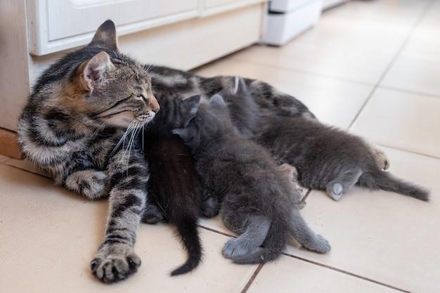 Madre gatto che allatta i suoi gattini