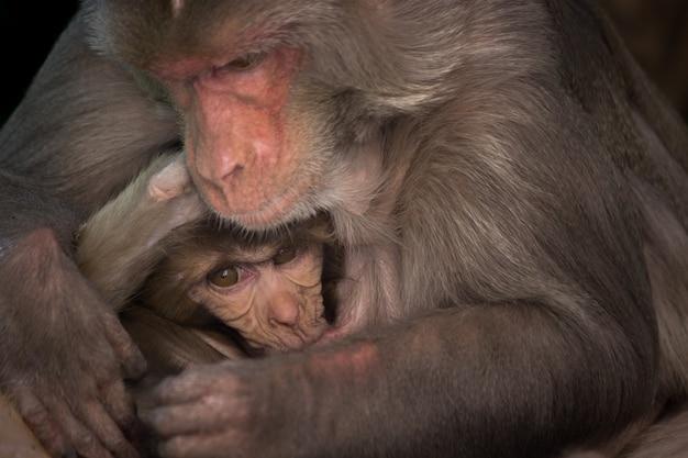 Madre scimmia che allatta il suo bambino