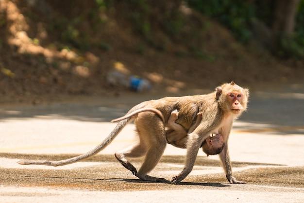 Madre scimmia con il suo bambino carino