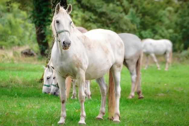 Maestosi cavalli sotto la pioggia