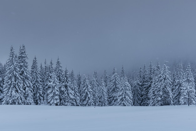 Maestoso paesaggio invernale, pineta con alberi coperti di neve.