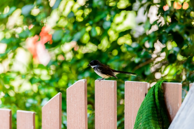 Magpie standing calm on wooden fence