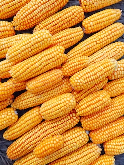 Mais giallo fresco e dolce per la lavorazione degli alimenti