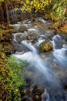 Majaceite del fiume