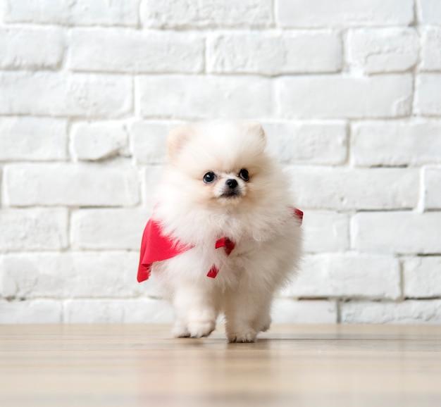 Mammifero del cucciolo del ritratto animale della razza dell'animale domestico