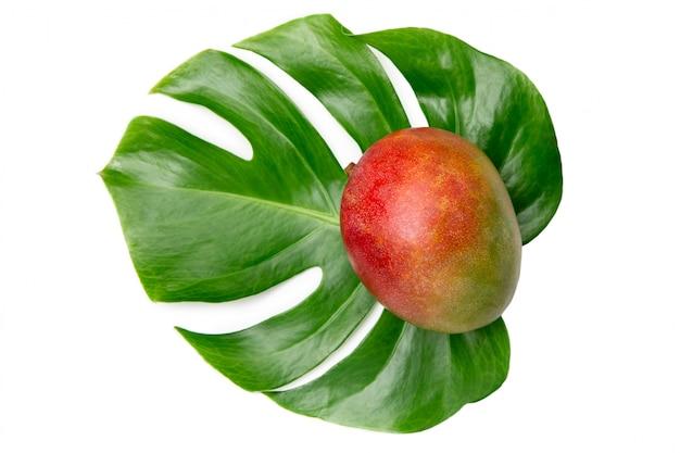 Mango maturo su una foglia di monstera su uno sfondo bianco isolato. frutti freschi e luminosi. tagliare la frutta. disteso. vista dall'alto.