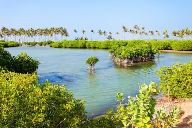 Mangrovie nello sri lanka