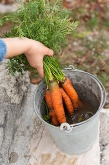 Mani che afferrano le carote da un secchio grigio