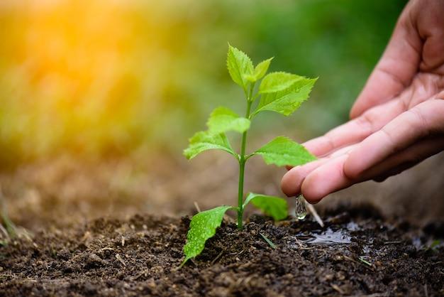 Mani che danno acqua ad un giovane albero per piantare. concetto di giornata della terra.