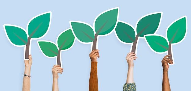 Mani che tengono clipart delle foglie della pianta