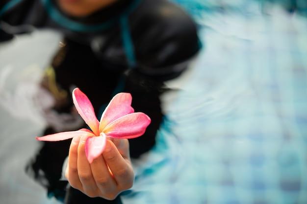 Mani che tengono i fiori del frangipane con acqua blu nella piscina