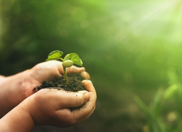 Mani che tengono la pianta di fagiolo per piantare. il concetto salva il mondo, la giornata mondiale della terra, dell'ambiente.