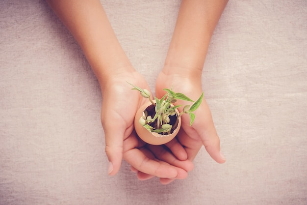 Mani che tengono le piante della piantina in gusci d'uovo, concetto di csr di educazione di eco