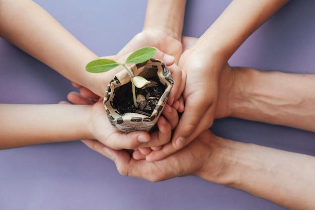 Mani che tengono le piante della piantina in vaso del giornale