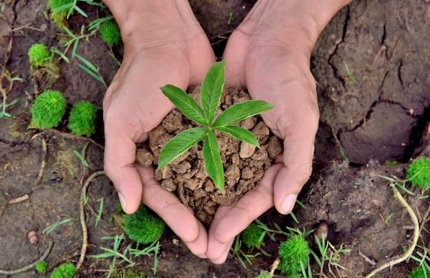 Mani che tengono pianta giovane su sfondi di natura del suolo