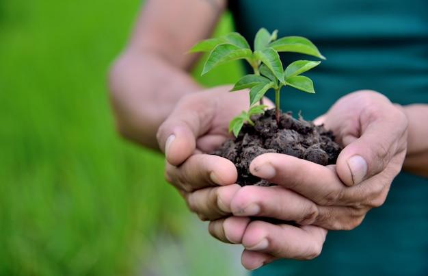 Mani che tengono piantare