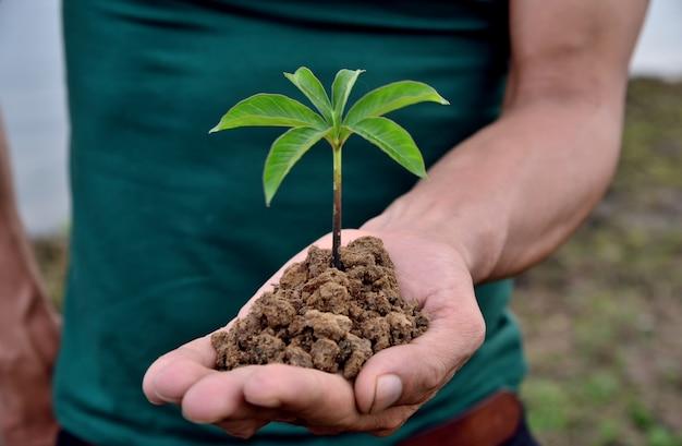 Mani che tengono piccola pianta giovane