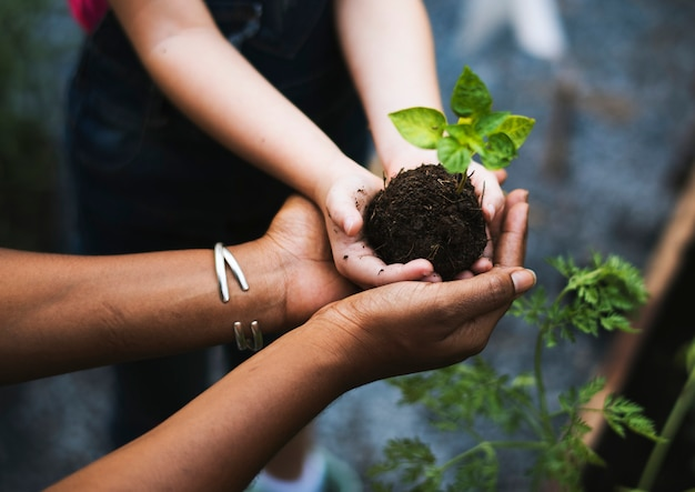 Mani che tengono un albero per piantare