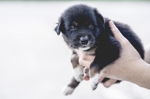 Mani che tengono un cucciolo nero