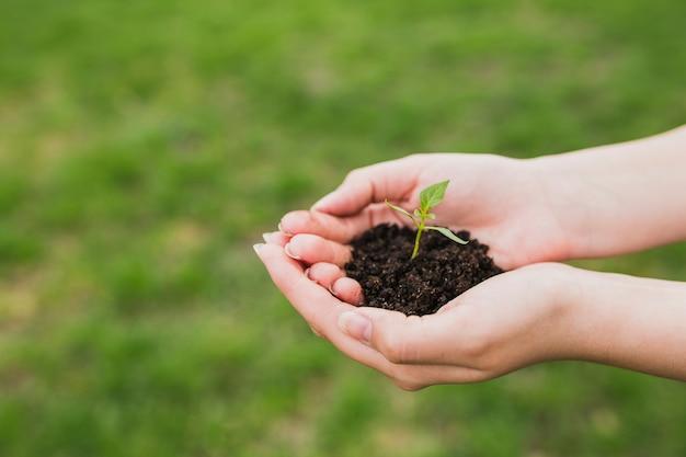 Mani che tengono una piccola pianta