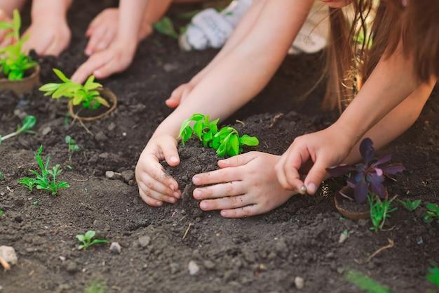 Mani dei bambini che piantano insieme giovane albero su suolo nero come il mondo