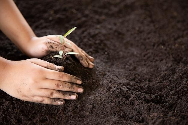 Mani del bambino tenendo e prendersi cura di una giovane pianta verde