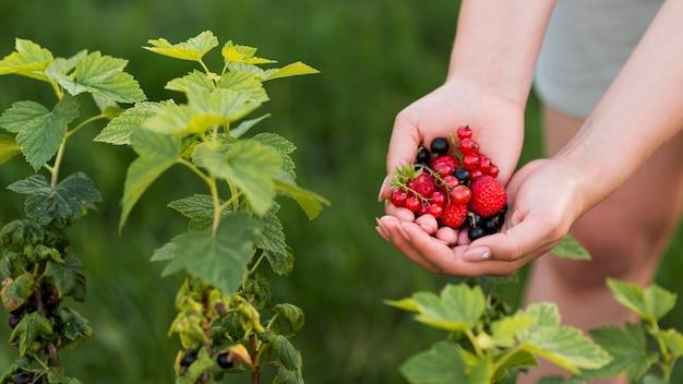 Mani del primo piano che tengono frutti