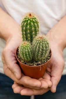 Mani del primo piano che tengono la piccola pianta del cactus