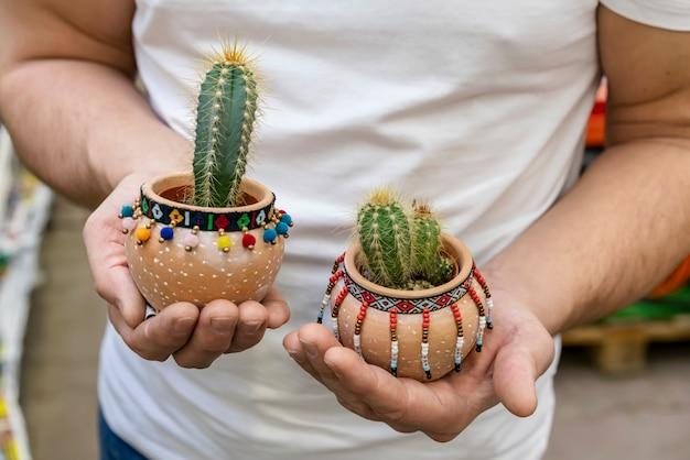 Mani del primo piano che tengono le piante di casa