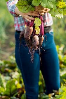 Mani del primo piano che tengono le verdure