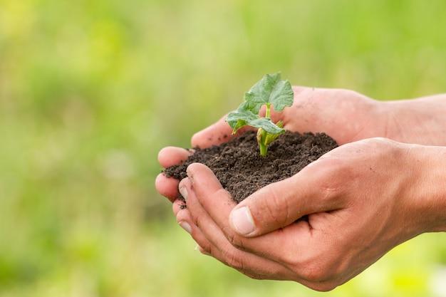 Mani del primo piano che tengono terreno con la pianta
