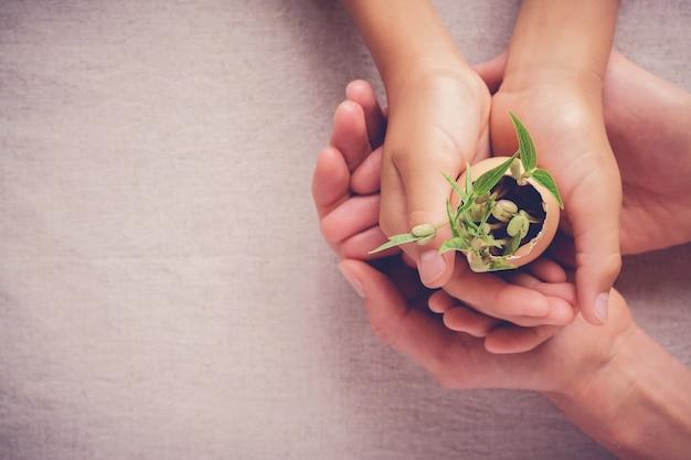 Mani dell'adulto e del bambino che tengono le piante della piantina in gusci d'uovo, giardinaggio di eco, montessori educ