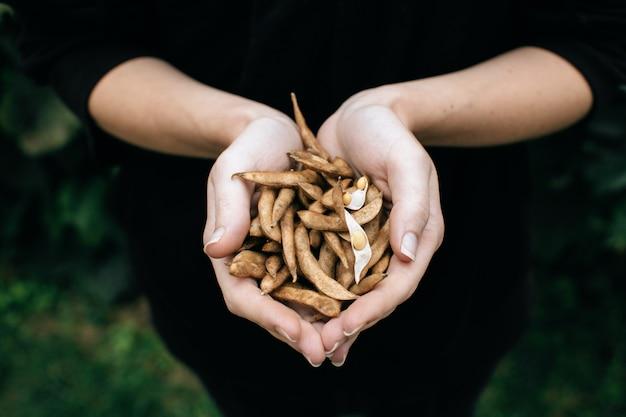 Mani dell'agricoltore con i semi di soia su campo agricolo coltivato, piantagione di soia di agricoltura biologica