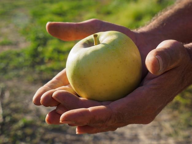 Mani dell'uomo del coltivatore che selezionano mela verde con la sua mano