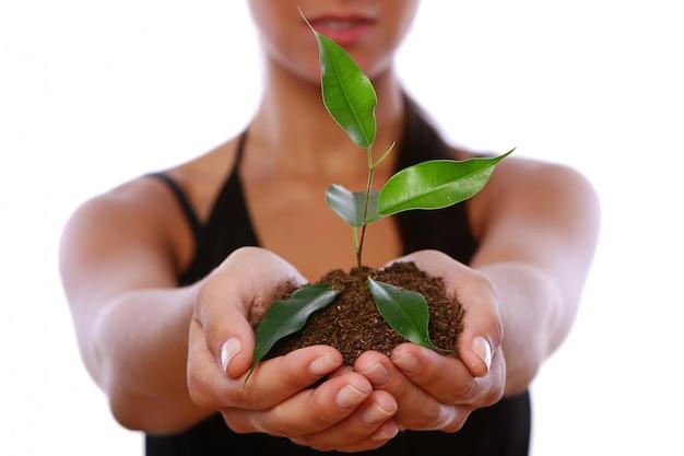 Mani della donna che prendono pianta verde