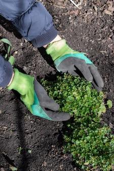 Mani della donna in guanti che tengono una pianta verde che cresce nel concetto di giornata mondiale dell'ambiente del giardino al giorno soleggiato