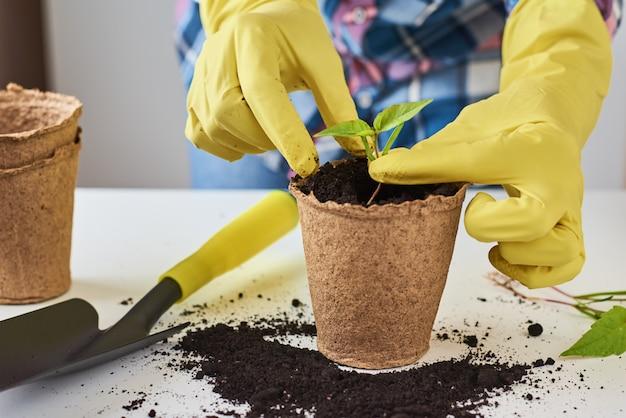 Mani della donna nella pianta di trapianto dei guanti gialli. concetto di cura delle piante