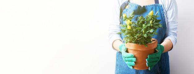 Mani di una giovane donna che pianta le rose nel vaso di fiori. piantare piante domestiche. giardinaggio a casa. banner lungo e largo con sfondo spazio copia