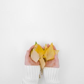 Mani di vista superiore che tengono le foglie di autunno