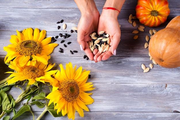 Mani femminili che tengono i semi di girasole e le zucche su un fondo di legno grigio.