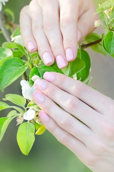 Mani femminili con i fiori di melo, manicure. avvicinamento