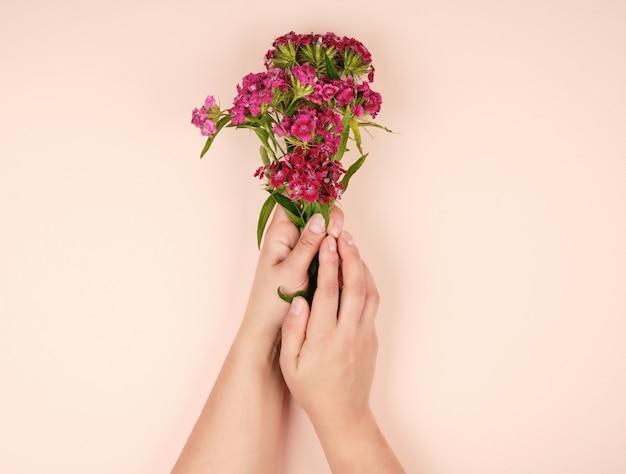 Mani femminili con pelle chiara liscia e boccioli di un garofano turco in fiore