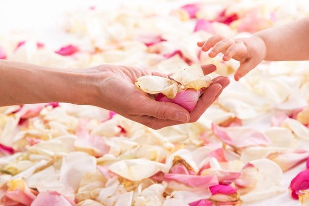 Mani femminili e del bambino con petali di rosa