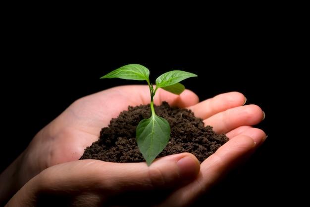 Mani in pianta