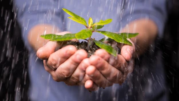 Mani tenendo la piantina sotto la pioggia