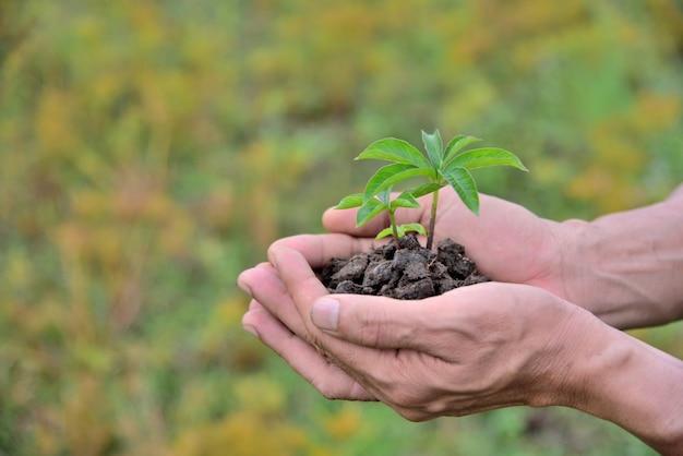 Mani umane che tengono le piante del bambino in terreno nero su sfondo giallo natura