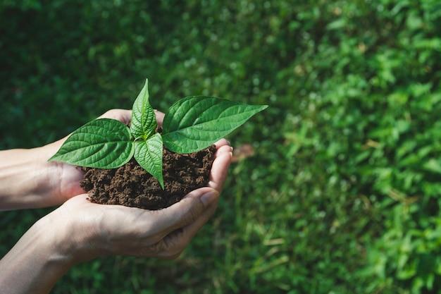Mani umane che tengono piccola pianta verde con copyspace. vita ed ecologia.