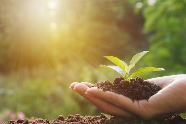 Mani umane che tengono piccolo concetto di vita di pianta verde. concetto di ecologia