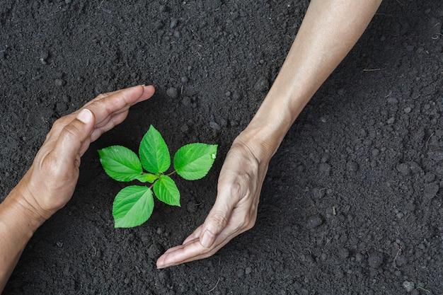Mani umane proteggendo la piccola pianta verde per la vita e il concetto di ecologia.